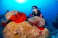 clare und anemone