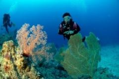 clare und korallen