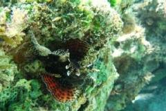 ein feuerfisch