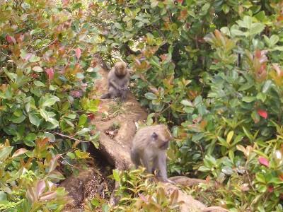 Affen im Urwald