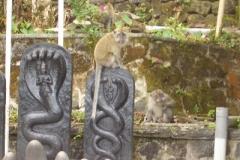 Affen auf heiligen Steinen